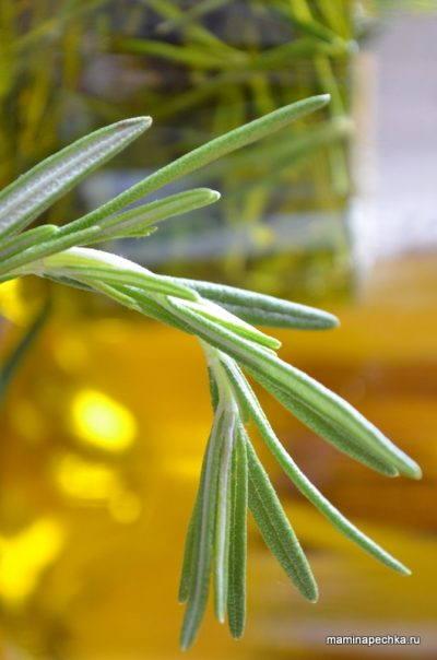 розмарин с оливковым маслом